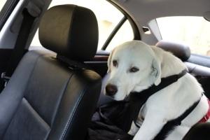 Klondike in Car 8-17